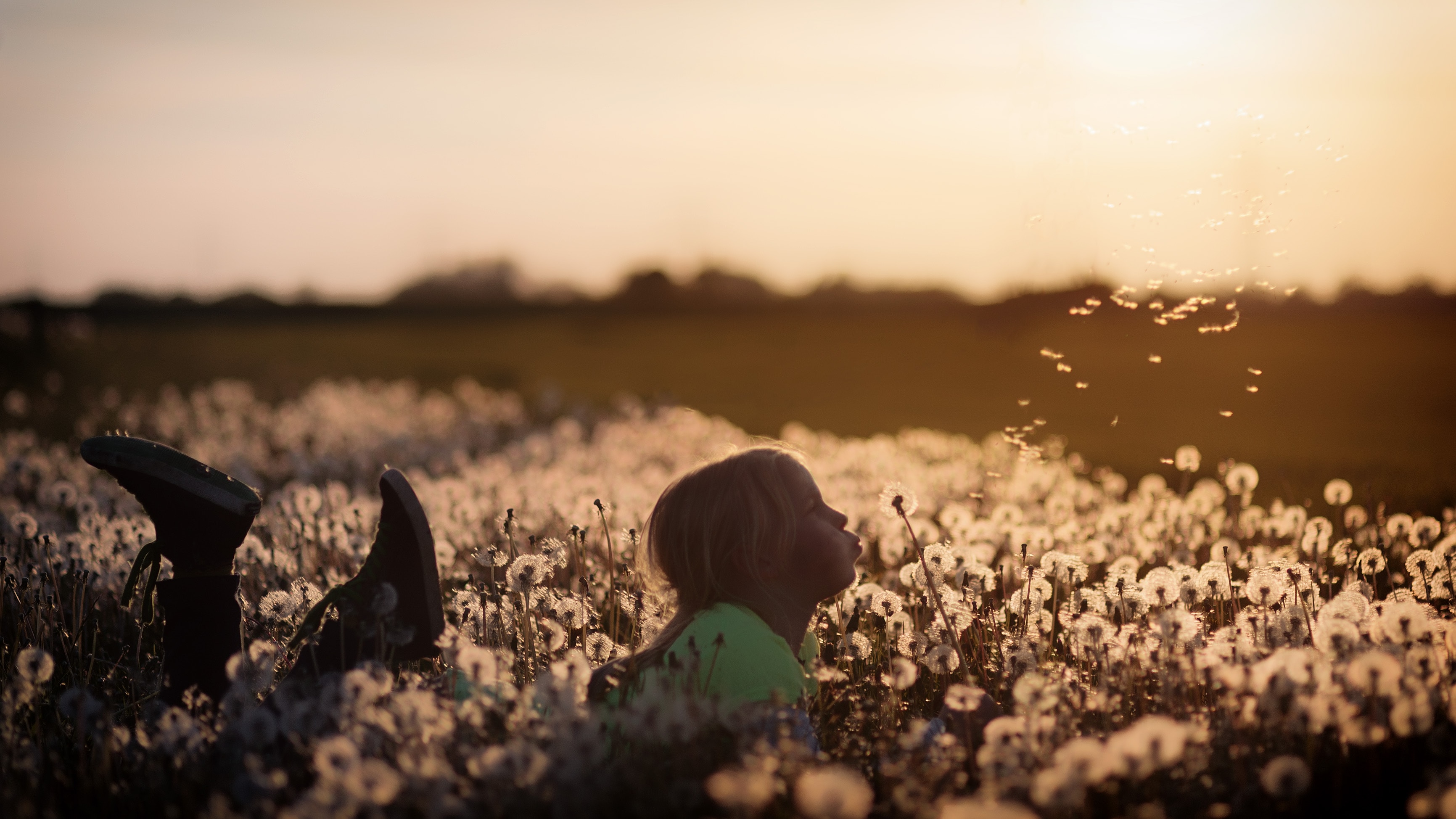 child lying in a file of dandelions, blowing the seeds off of one.