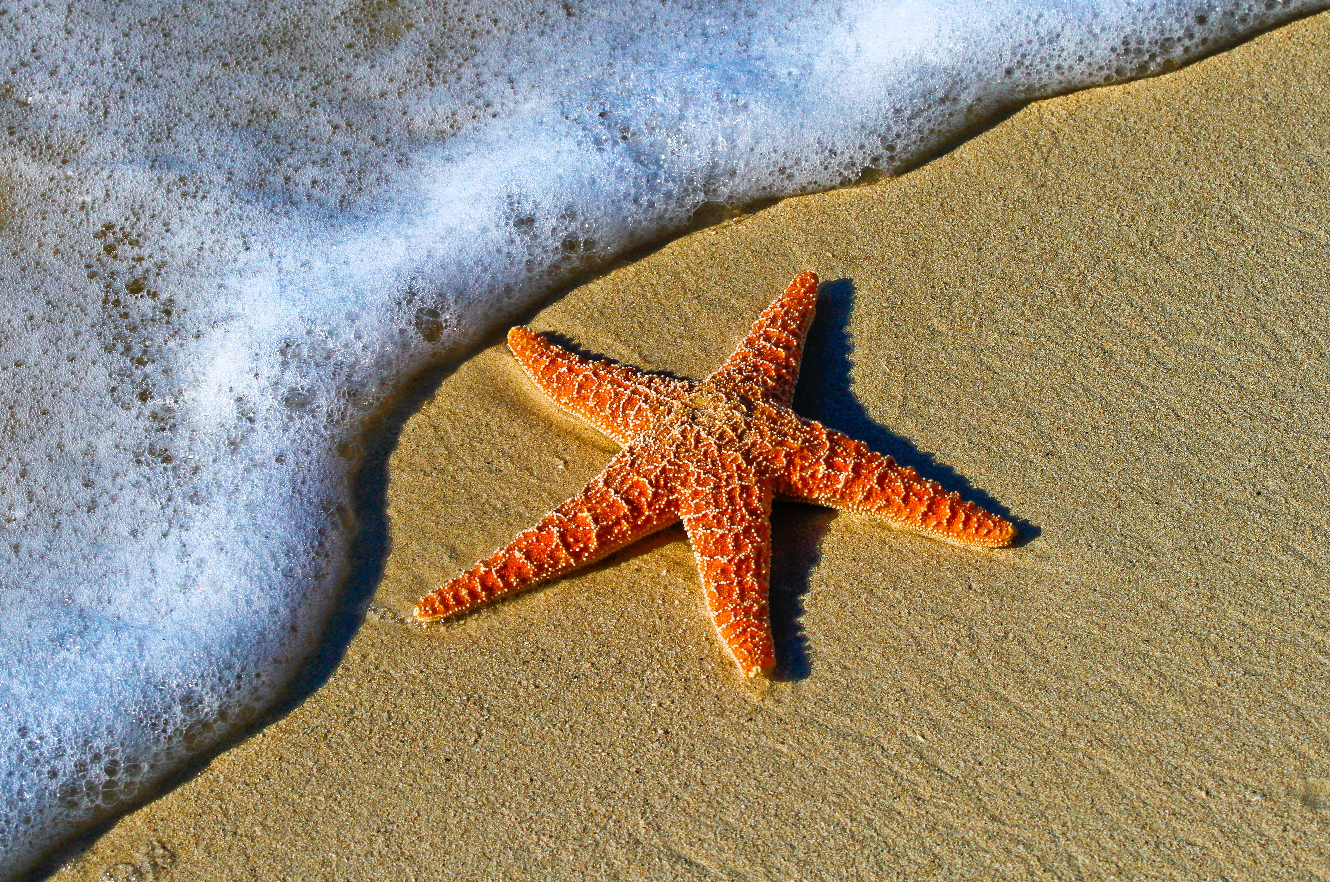 starfish on the beach next to bubbly ocean water