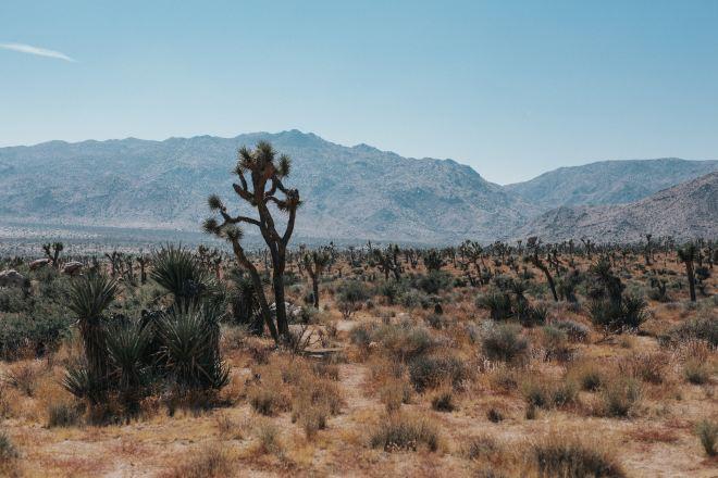 desert wilderness with one barren tree. mountainous background
